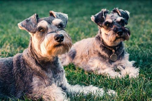 Top Things to Consider Before Buying a Dog