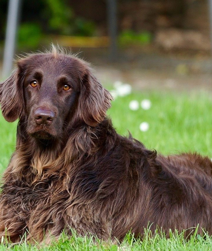Canine Kind: Dog Behaviours You Need to Know for Effective Training
