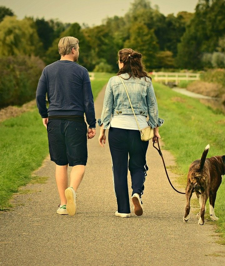 What Makes a Great Dog Walker?