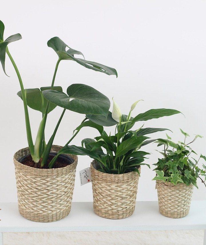 Indoor Gardening: The Secrets Nobody Tells You About Houseplants